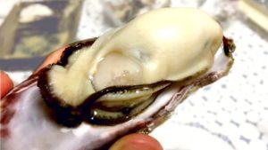 【青空レストラン】牡蠣みそと真牡蠣さこし忠臣蔵の値段や通販と口コミ!